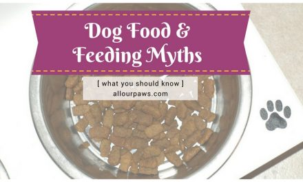 Dog Food and Feeding Myths