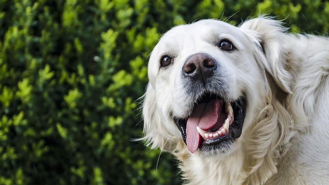 Dental Problems In Dogs To Watch Out For