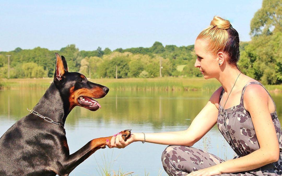 Beating Pet Illnesses With Prevention
