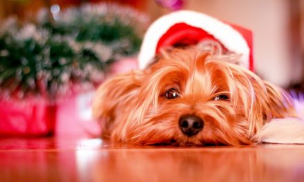 Essential Do's and Dont's For A Happy Christmas Canine