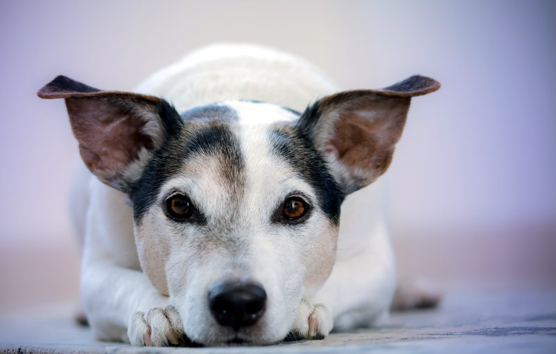 Keeping Your Senior Dog Happy and Healthy