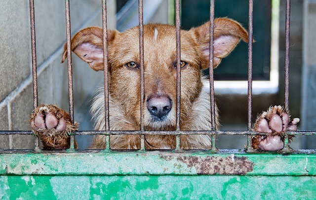Dog in a cage at the pound