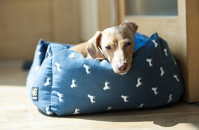 Dog snuggled in a dog bed