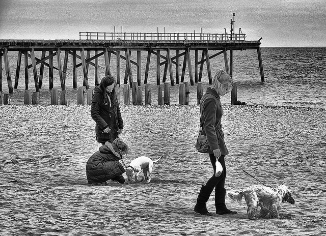 Girls walking dogs on the beach