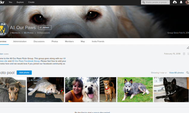 New Flickr Pet Group