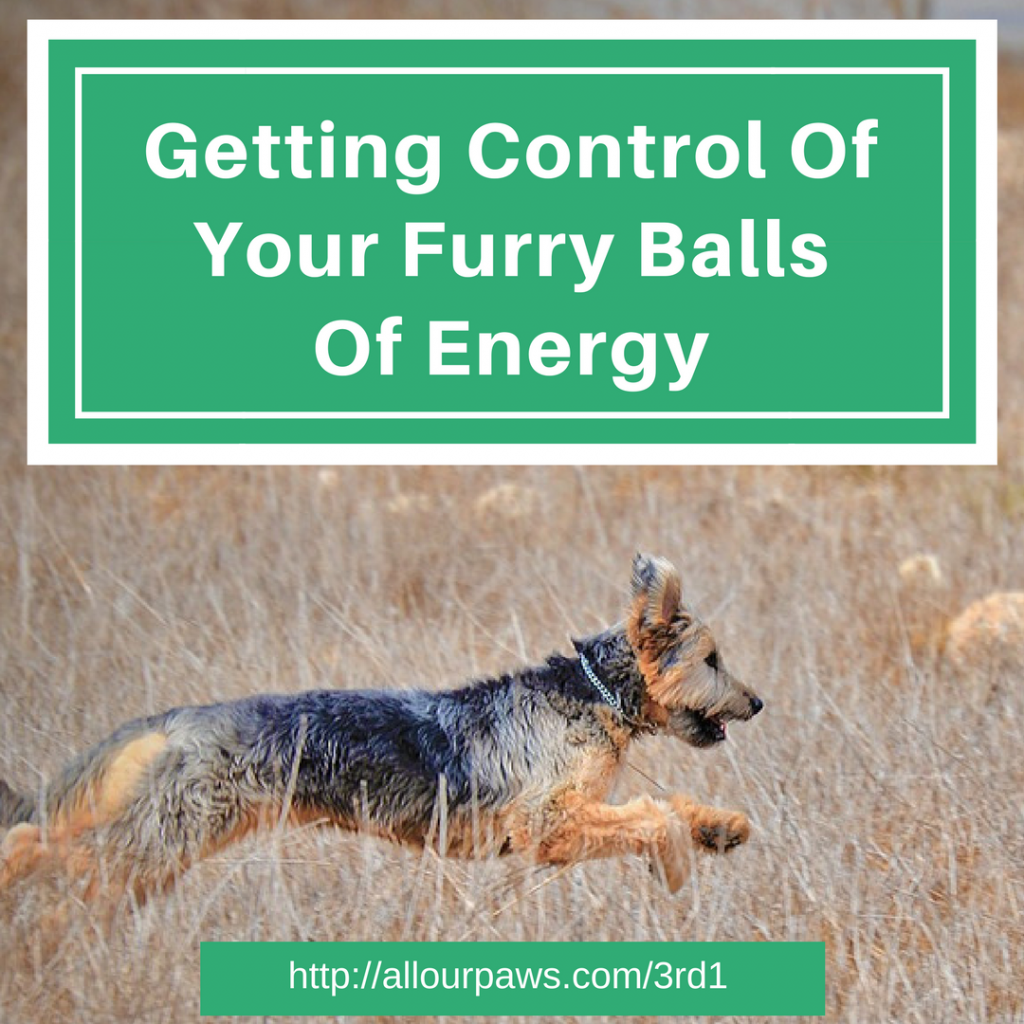 Getting Control of Energetic Dogs