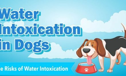 Water Intoxication in Dog, What is It and How to Handle It
