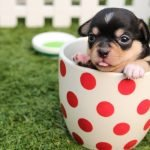 Things Every Pet Owner Should be Prepared For