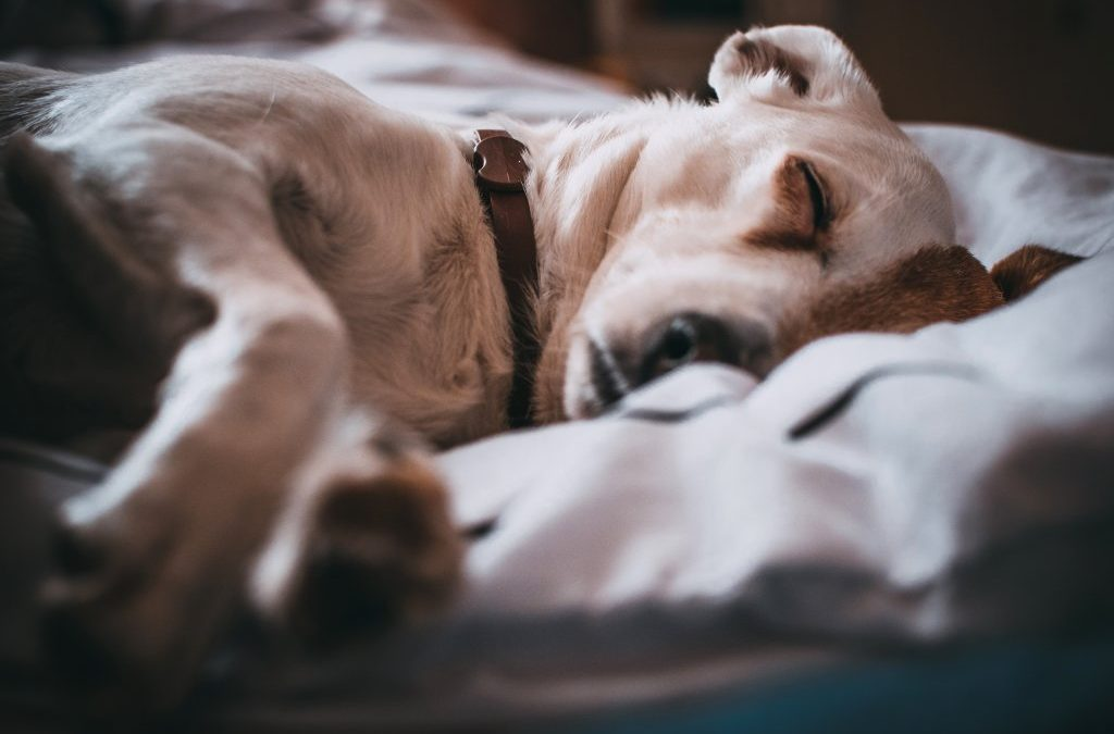 How to Choose the Perfect Doggy Hotel