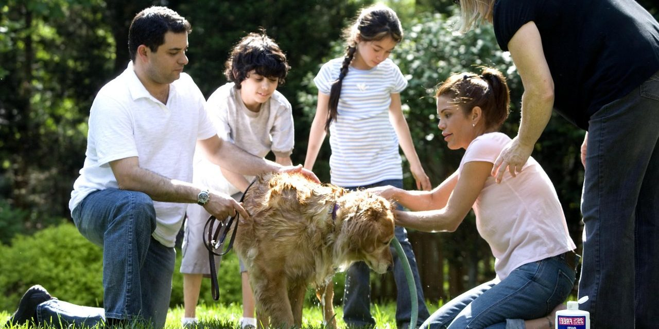 4 Rules For Getting A Family Dog