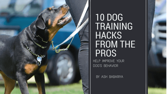 10 Dog Training Hacks from the Pros