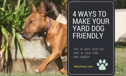 How To Make A Doggo Heaven In Your Yard / Garden