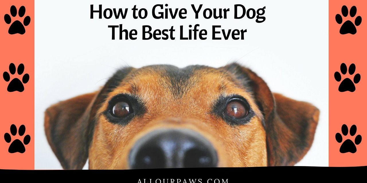 How to Give Your Dog The Best Life Ever