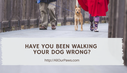 Have You Been Walking Your Dog Wrong This Whole Time?