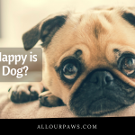 How Happy Is Your Dog?