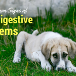Most Common Signs of Dog Digestive Problems
