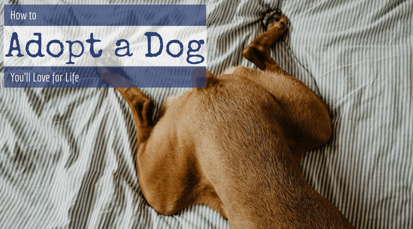 How to Adopt a Dog You'll Love for Life