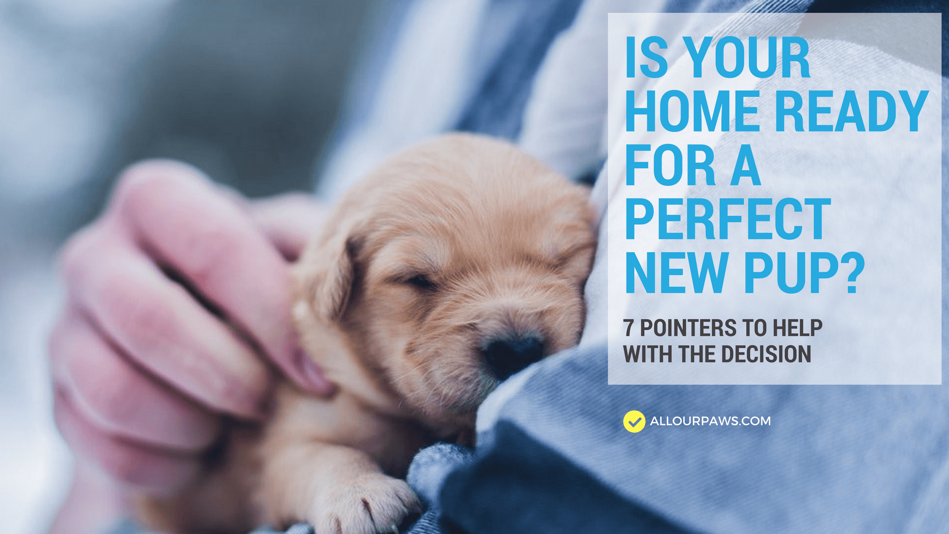 Is Your Home Ready for a Perfect New Pup? 7 Pointers to Help With the Decision