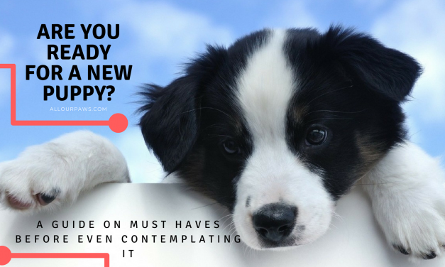 Are You Ready For A New Puppy? A Guide On Must Haves Before Even Contemplating It