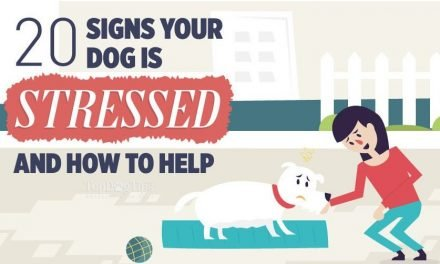 Does Stress Bother Dogs, Too?
