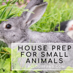House Preparations For Small Animals