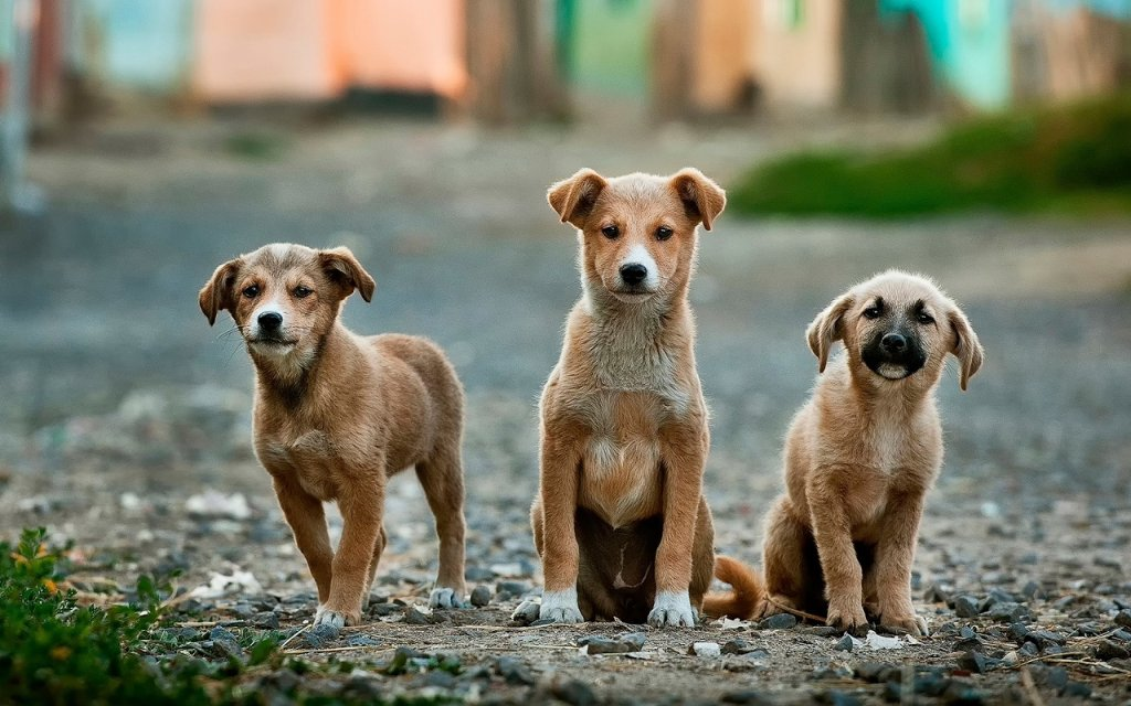 Three puppies on a gravel road
