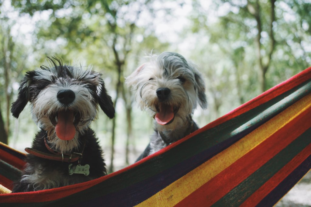 Two puppies in a hammock
