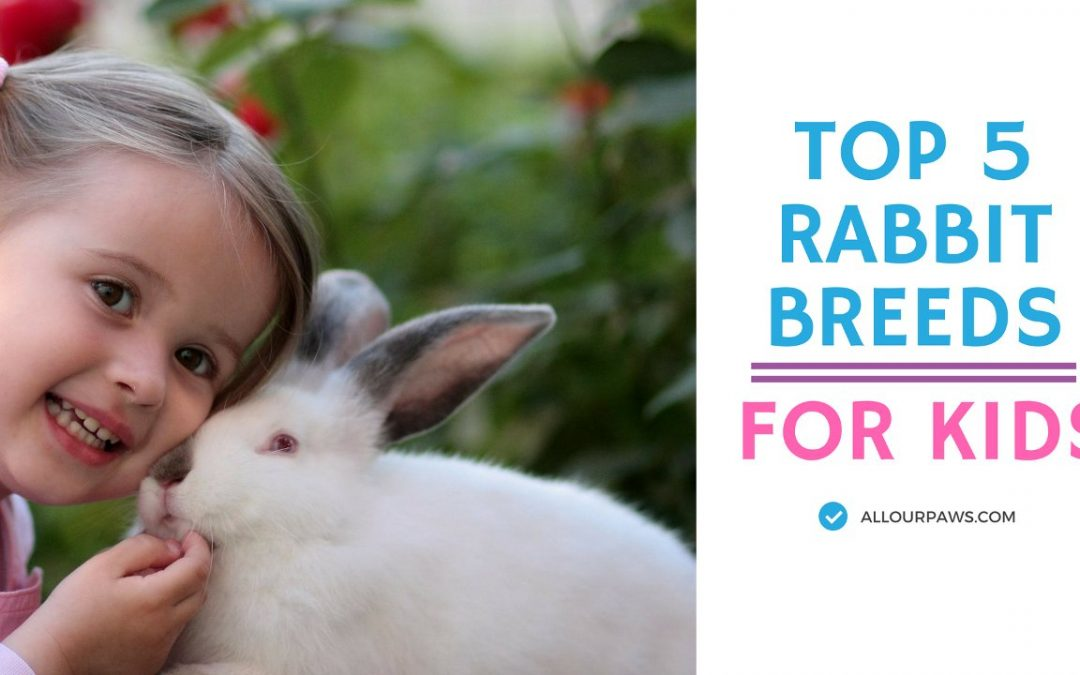 Top 5 Rabbit Breeds as Pets for Your Kid