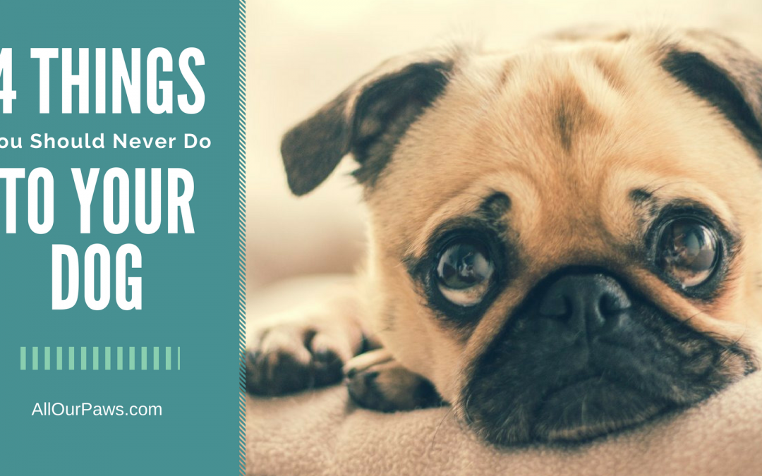 4 Things You Should Never Do To Your Dog