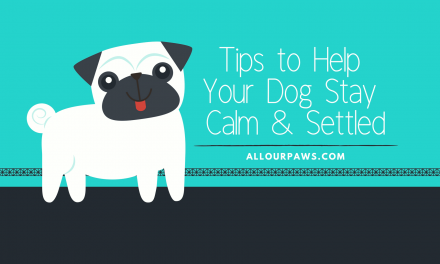 Tips to Help Your Dog Stay Calm & Settled