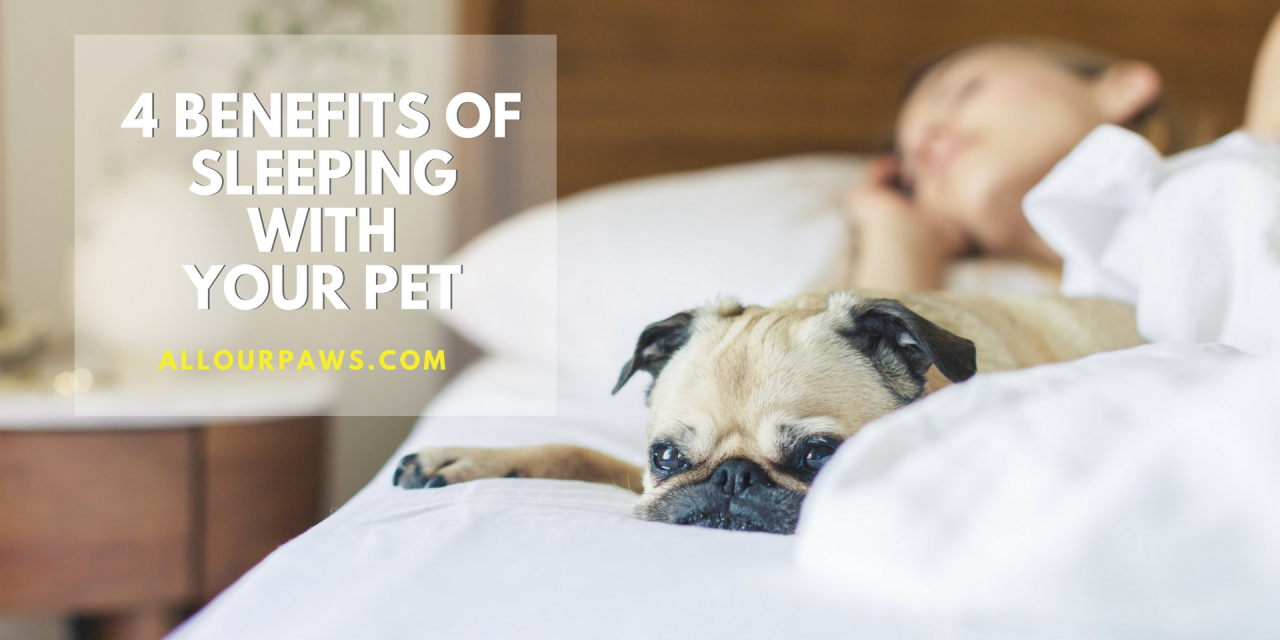 4 Benefits of Sleeping With Your Pet