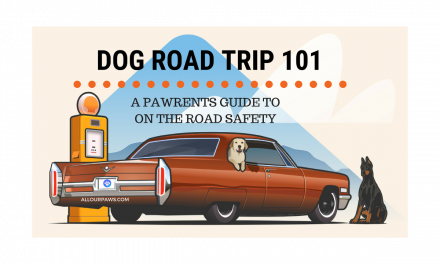 Dog Road Trip 101: A Pawrents Guide to On the Road Safety