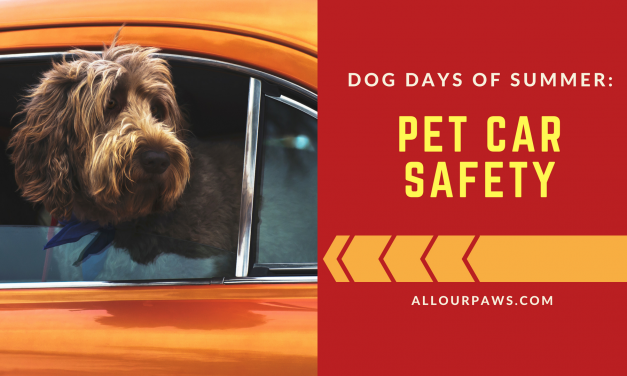 Dog Days of Summer: Pet Car Safety