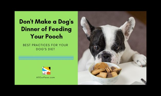 Don't Make a Dog's Dinner of Feeding Your Pooch