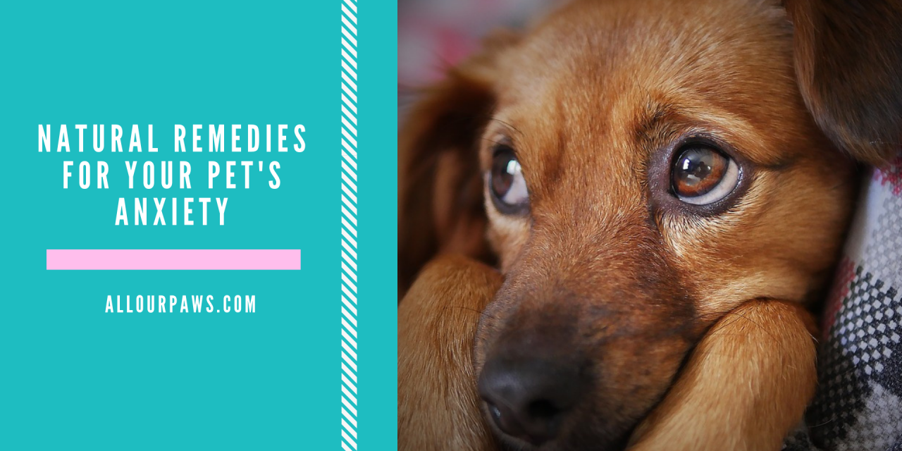 Natural Remedies for Your Pet's Anxiety