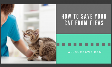 How to Save Your Cat from Fleas