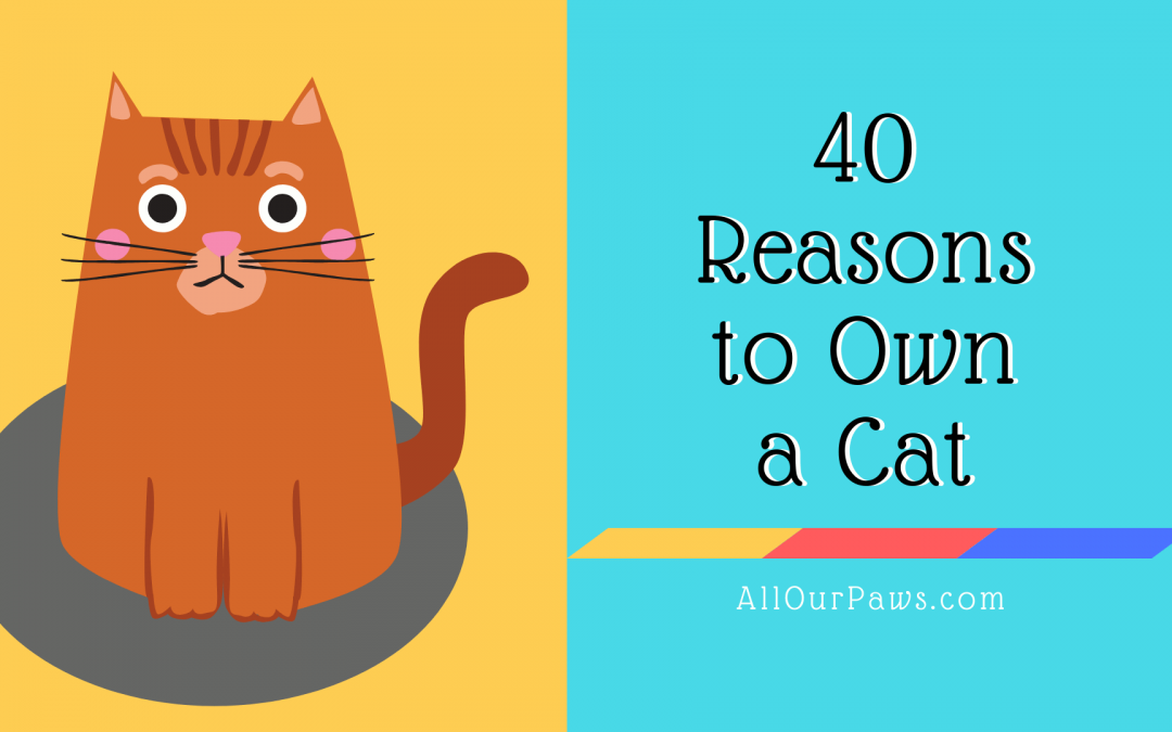 40 Reasons to Own a Cat