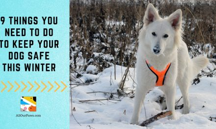 9 Things You Need To Do  To Keep Your Dog Safe This Winter