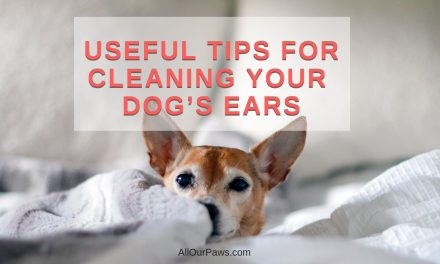 Useful Tips for Cleaning Your Dog's Ears