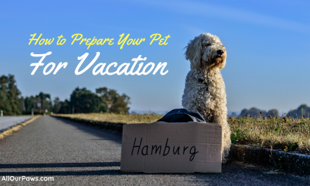 How to Prepare Your Pet for Vacation