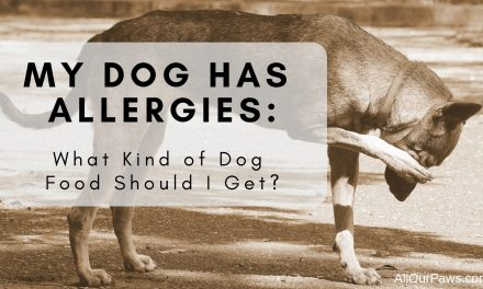 My Dog has Allergies: What Kind of Dog Food Should I Get?