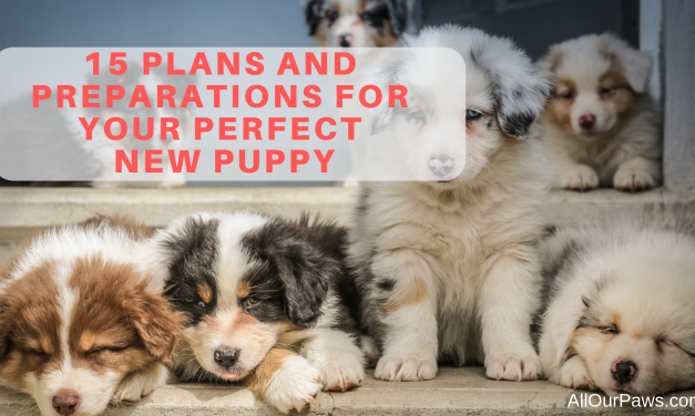 15 Plans and Preparations for your Perfect New Puppy