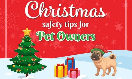 Keep an Eye on Your Pet This Christmas
