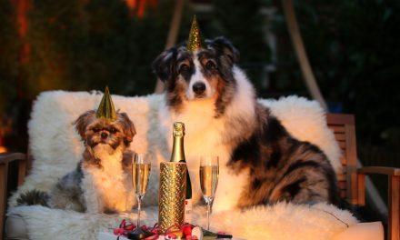 New Year's Resolutions That Benefit Your Dog