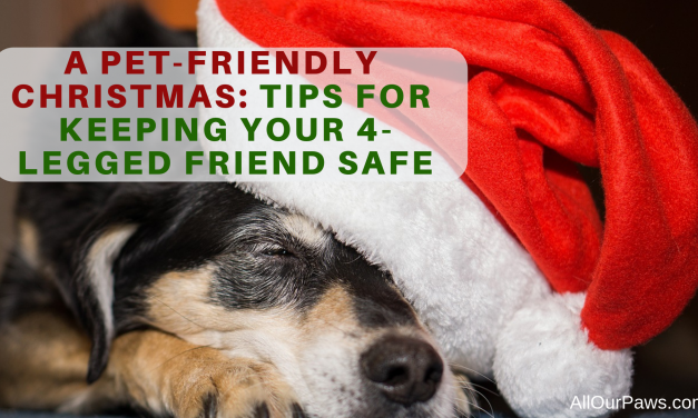 A Pet-Friendly Christmas: Tips for Keeping Your 4-Legged Friend Safe