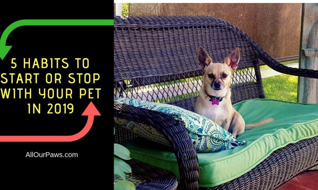 5 Habits to Start or Stop with Your Pet in 2019