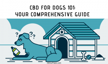 CBD for Dogs 101: Your Comprehensive Guide