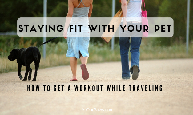Staying Fit With Your Pet: How to Get a Workout While Traveling