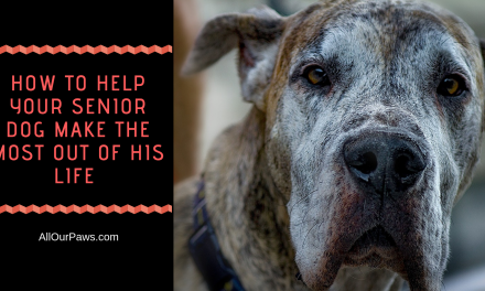 How to Help Your Senior Dog Make the Most Out of His Life