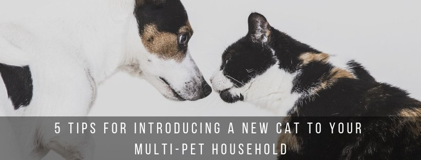 5 Tips for Introducing a New Cat to Your Multi-Pet Household